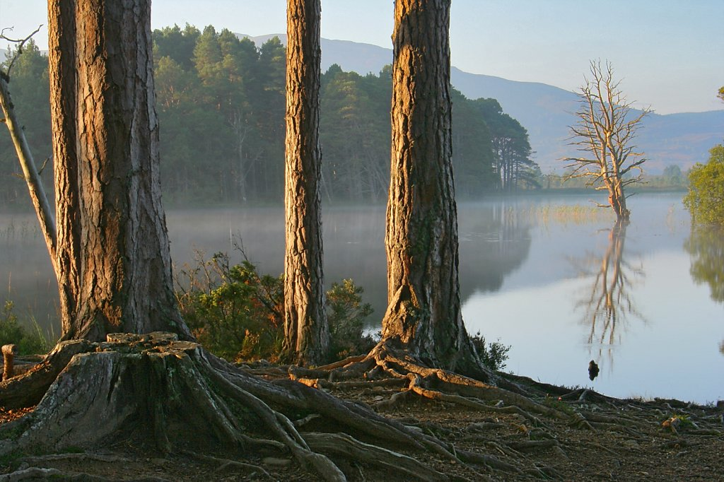"""Shores of Loch Mallachie"""