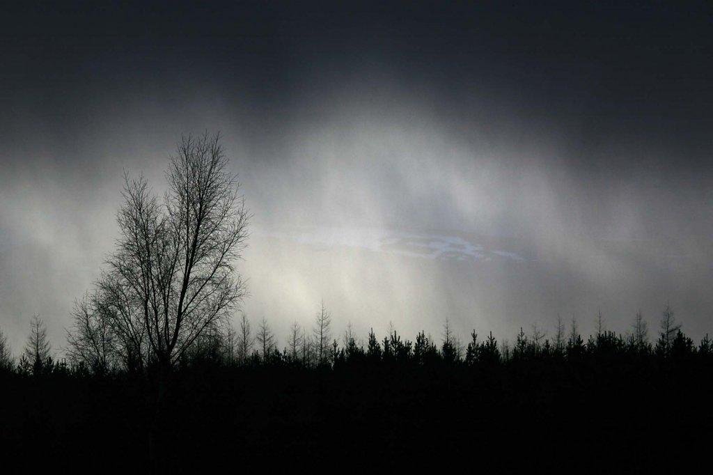 """Snowstorm"" Abernethy nature reserve"