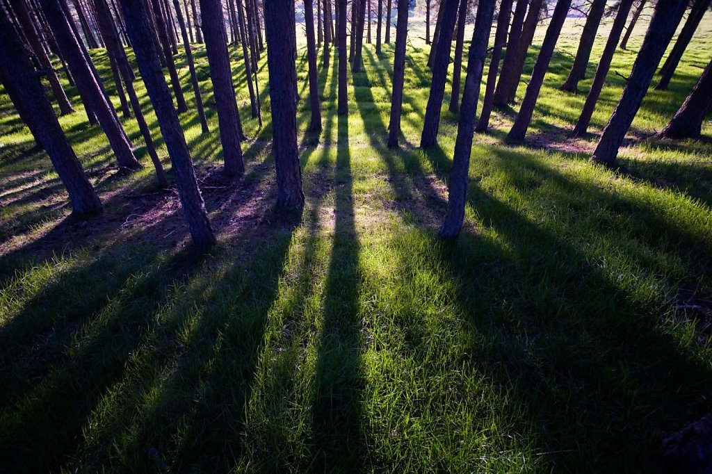 """""""Forest of shadows"""""""